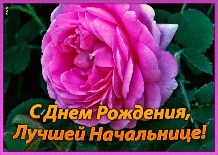 сожалению, поздравления с днем рождения для самой лучшей начальнице луганске